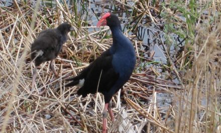 Melbourne Park Walk: Hawkstowe Park Lakes – Plenty Gorge – Victoria