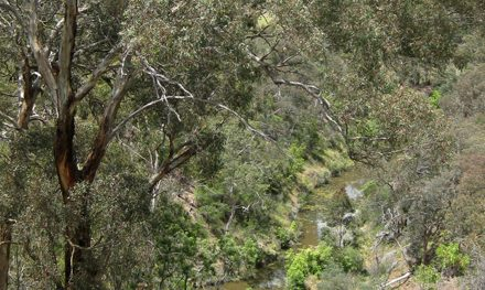 Melbourne Park Walk: Middle Gorge Park Circuit – Middle Gorge Park – Plenty Gorge – Victoria