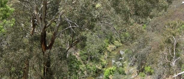 Melbourne Park Walk: Middle Gorge Park Circuit – Middle Gorge Park – Plenty Gorge – Victoria