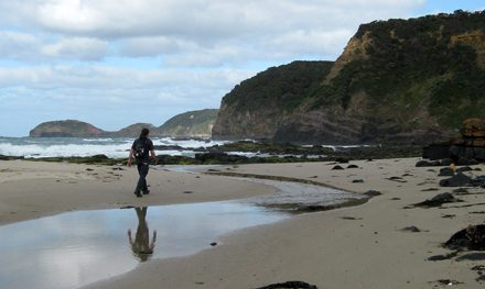 Cape Schanck to Main Creek (Return) – Mornington Peninsula National Park – Victoria