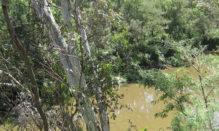 Melbourne Park Walk: River Edge Walk & Cherry Tree Grove Walk – Banksia Park – Bulleen – Victoria