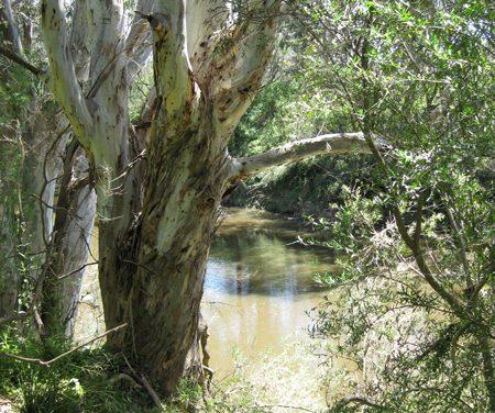 Melbourne Park Walk: Birrarrung Park – Bulleen – Victoria