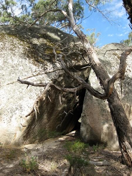 Lar-ne-Jeering Walk – Langi-Ghiran State Park – Victoria