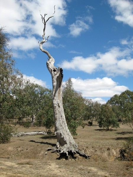Back Paddock (Long Circuit) – Woodlands Historic Park – Greenvale – Victoria