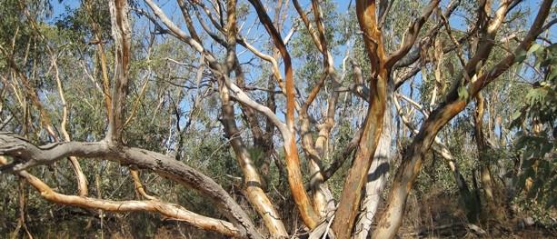 Friends Track – Warby Range State Park – Wangaratta – Victoria