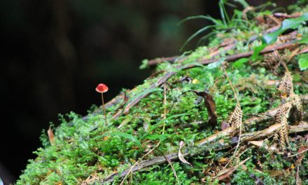 Melba Gully – Madsen's Track Nature Walk – Great Otway National Park – Lavers Hill – Victoria