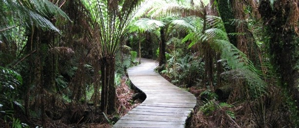 Maits Rest Rainforest Walk – Great Otway National Park – Apollo Bay – Victoria