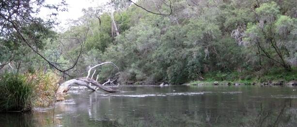 Black Flat – Warrandyte State Park – Warrandyte – Victoria