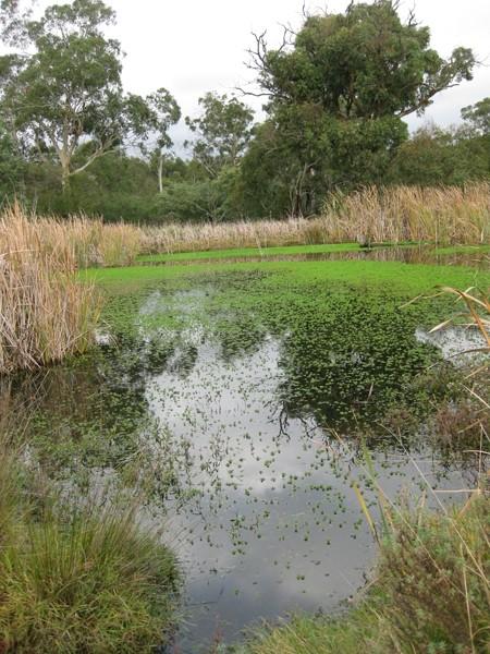 Melbourne Park Walk: Jells Lake Circuit – Jells Park – Wheelers Hill – Victoria