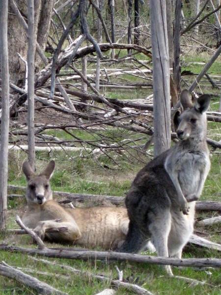 Lysterfield Lake Circuit Walk (inc. Acacia Nature Walk) – Lysterfield Park & Churchill National Park – Narre Warren North – Victoria