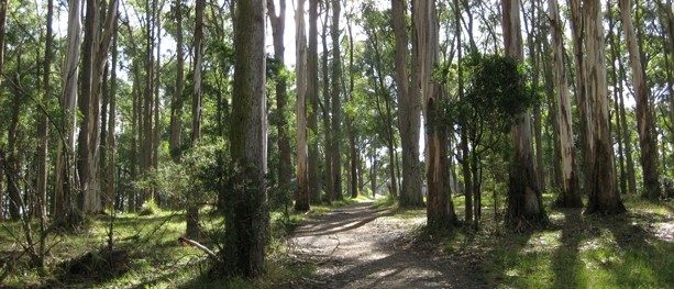 Circumnavigate One Tree Hill – Dandenong Ranges National Park – Tremont – Victoria