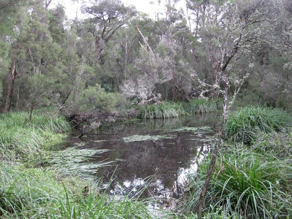Melbourne Park Walk: Shepherds Bush – Wheelers Hill – Victoria