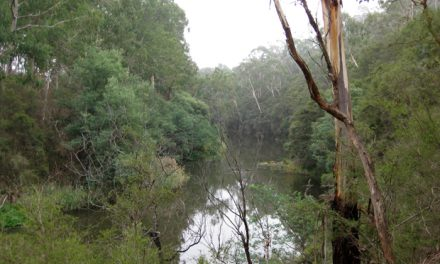 Jumping Creek Nature Trail – Warrandyte State Park – Warrandyte