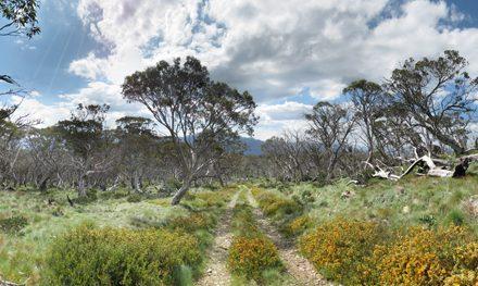 Mount Wills – Mount WIlls Historic Area – Alpine National Park – Mitta Mitta – Victoria