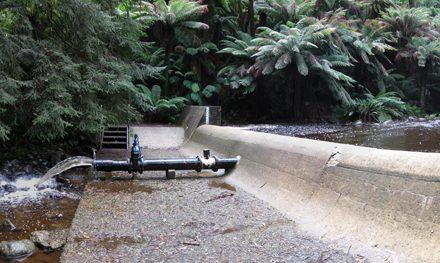 Badger Weir Circuit – Yarra Ranges National Park – Healesville – Victoria