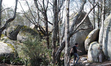 Mushroom Rocks – Baw Baw National Park – Rawson – Victoria