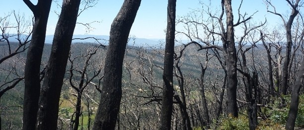 Documentary: Out of the Ashes – Nature's Rebirth Following the Black Saturday Bushfires