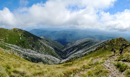Mount Bogong Circuit | Alpine National Park – Mount Beauty – Victoria (Mount Bogong Conquestathon)
