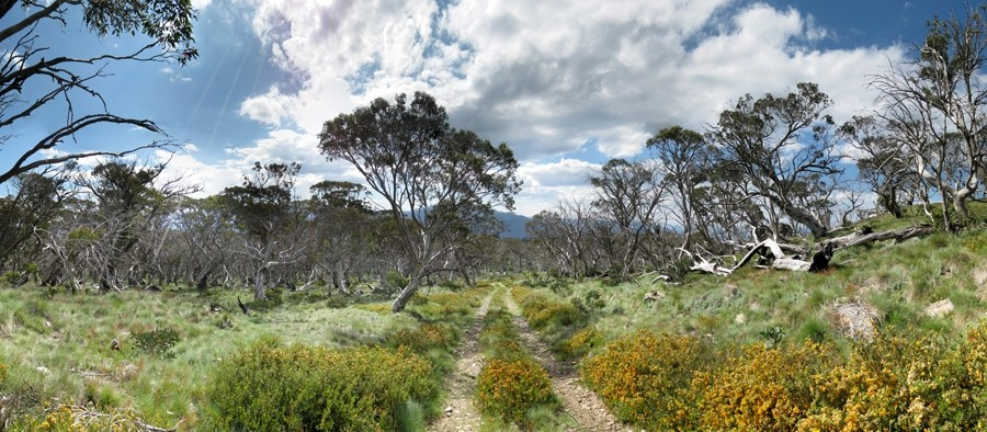 The track to Mount Wills - Alpine National Park - Victoria