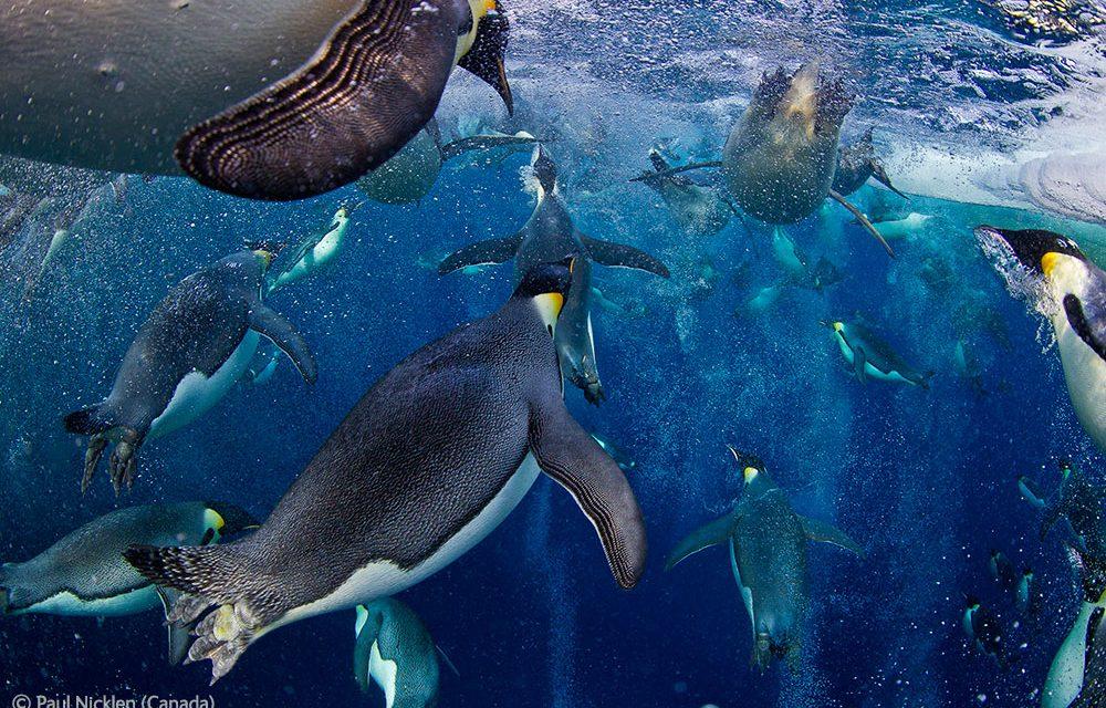 News: Wildlife Photographer of the Year 2012 winners announced