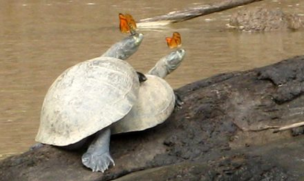 Photo essay: Two days in the Peruvian Amazon Basin