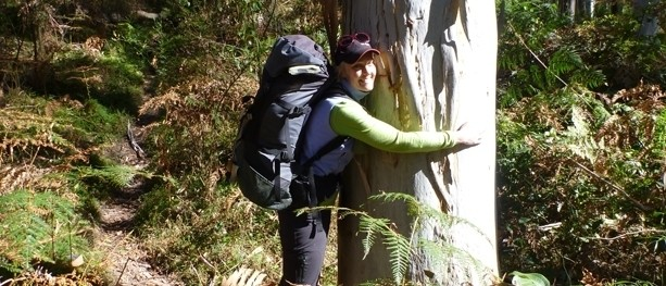 The bushwalking nemesis: A Blue Mountains trail that makes hikers groan