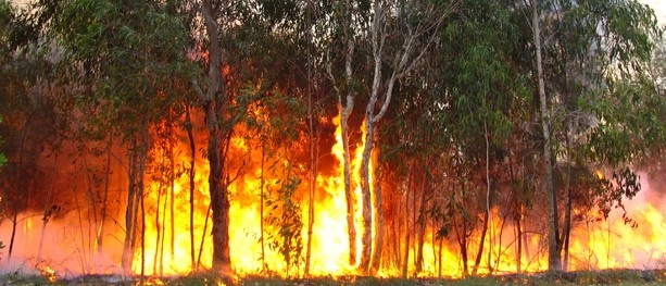 Being Fire Ready: How to stay safe when camping or hiking in bushfire season