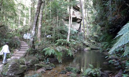 Grand Canyon Track: One of the Blue Mountains National Park's most stunning walks