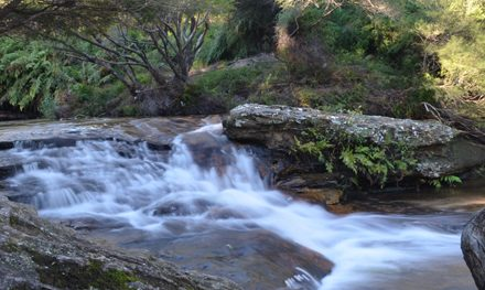 A day in the Blue Mountains: Wentworth Falls, Katoomba Falls, and Echo Point