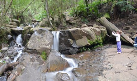 Olinda Falls via Mechanics Track: When hiking with kids doesn't quite go as planned