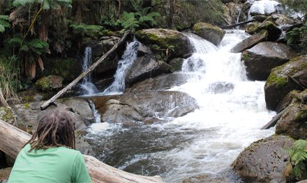 The Visit Marysville app – everything you need to plan a day or a weekend of bushwalking in Marysville