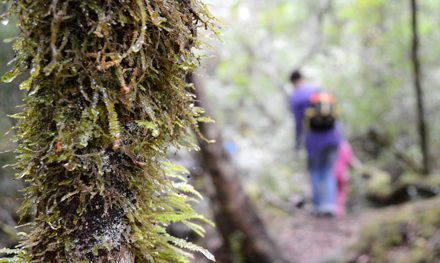 Tasmania with Kids – Part 2: A Taste of the Tarkine at Corinna Wilderness Experience
