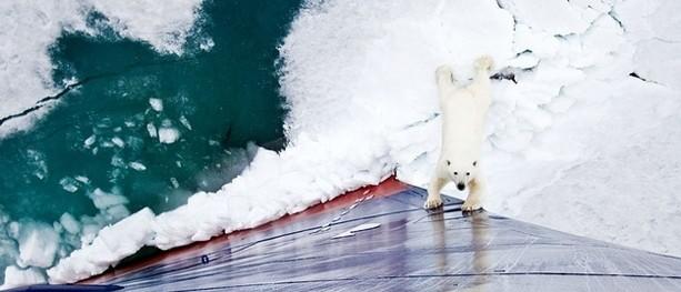 Apocaloptimistic: the psychology of climate action