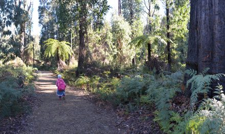 Marvelous Marysville: The Beauty Spot Trail and Steavensons Falls (with our Fairy Princess tour guide)