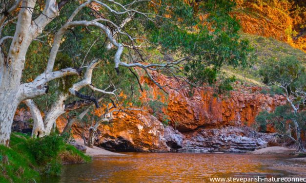 Nature photography and connection: Interviewing my favourite photographer, Steve Parish