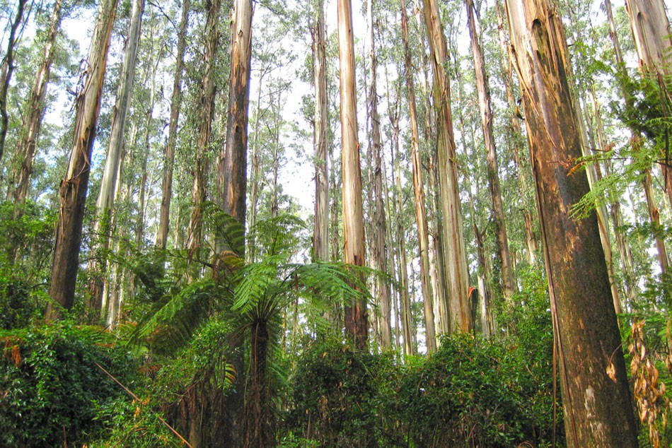 Sleeping amongst the trees: A walking honeymoon in the Dandenong Ranges
