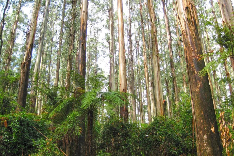 Sleeping amongst the trees: A walking honeymoon in the Dandenong Ranges