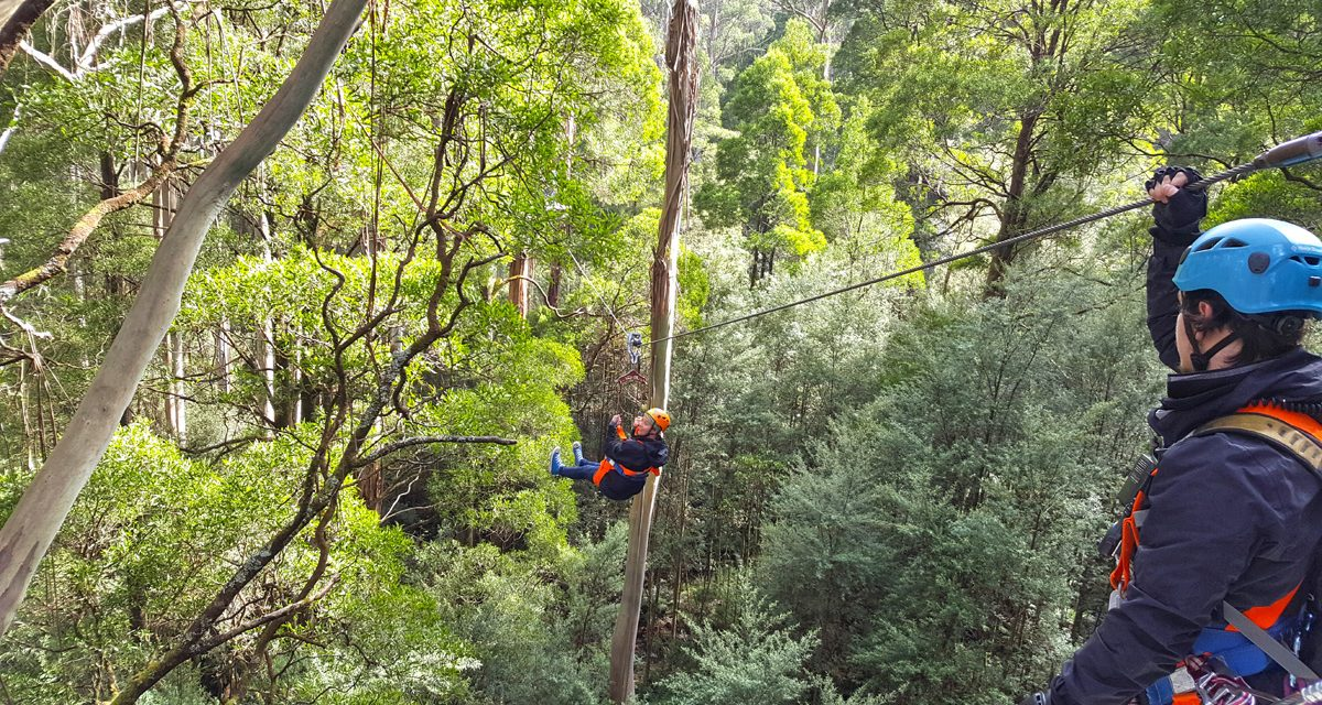 An Otways Long Weekend – Part 2: Otway Fly Treetop Walk & Zipline