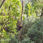 An Otways Long Weekend – Part 2: Otway Fly Treetop Walk & Zipline