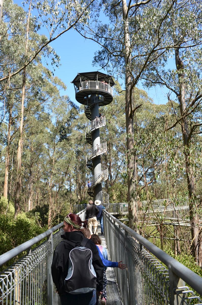 Otway Fly Treetop Walk tower
