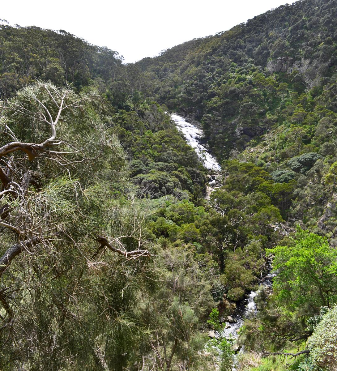 Carisbrook Falls - Great Otway National Park - Great Ocean Road