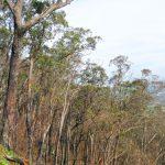 Dandenong Ranges Circuit – Dandenong Ranges National Park – Victoria (Bare Bones Bushwalking)