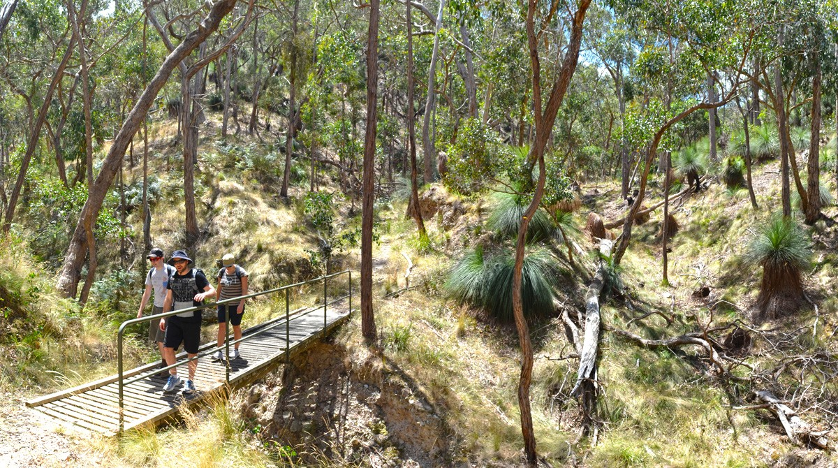 The Grass Tree Walk - Brisbane Ranges National Park - Victoria - Australia