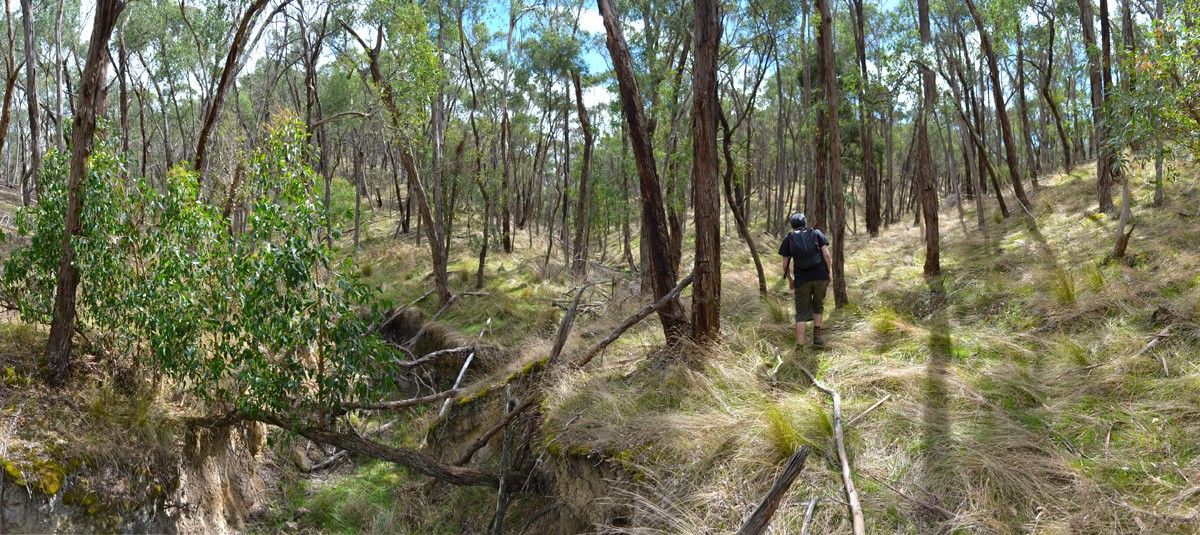 Little Forest - Bungal State Forest - Victoria