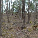 Little Forest Circuit – Bungal State Forest – Victoria (Bare Bones Bushwalking)