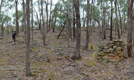 Little Forest Circuit – Bungal State Forest – Victoria (Bare Bones Bushwalking)