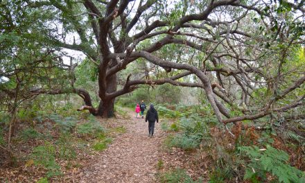 Batemans Bay (and surrounds) with kids: Eurobodalla's best outdoor adventures – Day One