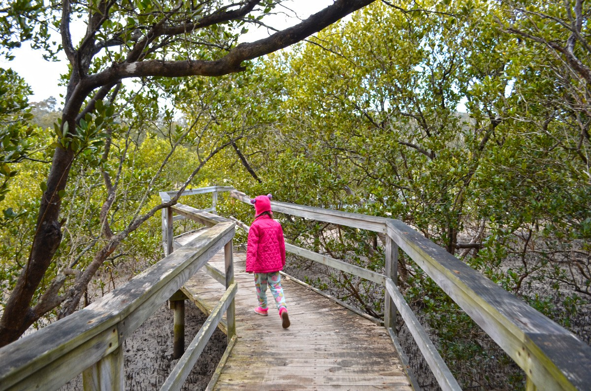 Mangrove Walk - Batemans Bay