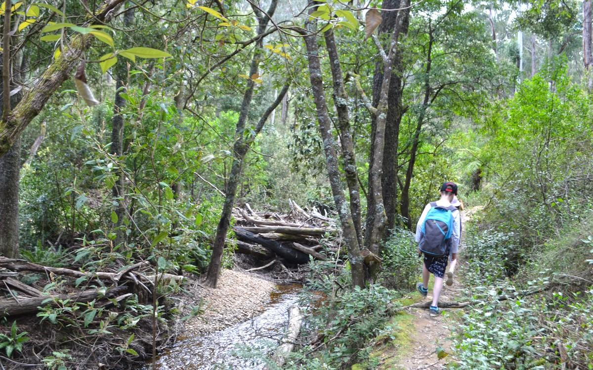 Lerderderg River Heritage Walk - Wombat State Forest - Victoria - Australia
