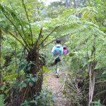 Lerderderg Heritage River Walk – Wombat State Forest – Victoria (Bare Bones Bushwalking)